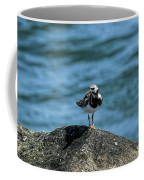 Ruddy Turnstone 2 Coffee Mug