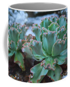 Echeveria Rosea  Coffee Mug