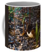 Rufous Sided Towhee At A Glance Coffee Mug