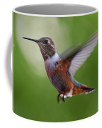 Rufus Hummingbird In Flight Coffee Mug