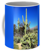 Sabino Canyon Coffee Mug