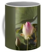 Sacred Lotus - Nelumbo Coffee Mug