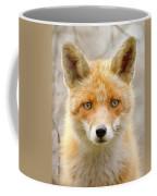 Sad Eyed Fox Of The Lowlands - Red Fox Portrait Coffee Mug