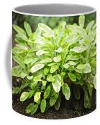 Sage Plant Coffee Mug