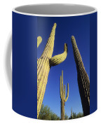 Saguaros Dwaft One Another Coffee Mug
