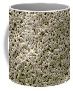 Salmonella Biofilm Coffee Mug