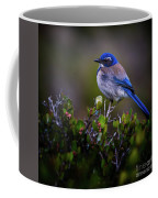 San Diego Bluebird Coffee Mug