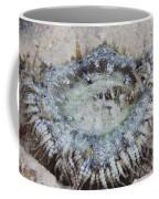 Sand Anemone, Bonaire, Caribbean Coffee Mug by Terry Moore