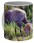 Sandhill Crane And Chick Coffee Mug