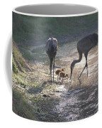 Sandhill Crane Family In Morning Sunshine Coffee Mug by Carol Groenen