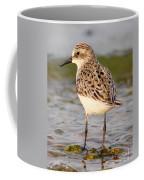 Sandpiper Portrait Coffee Mug