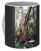 Santa Barbara Eucalyptus Forest Coffee Mug