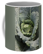 Savoy Cabbage In The Vegetable Garden Coffee Mug