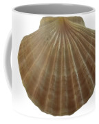 Scallop Shell Coffee Mug
