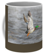 Scared Mallard Drake Coffee Mug by Robert Frederick
