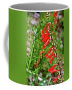 Scarlet Bugler In Rancho Santa Ana Botanic Garden In Claremont-californi Coffee Mug