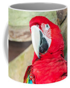 Scarlet Macaw Face Coffee Mug