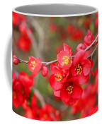 Scarlet Quince Blooms Coffee Mug