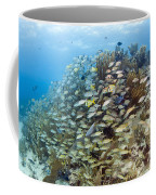 Schools Of Grunts, Snappers, Tangs Coffee Mug by Karen Doody