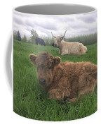 Scottish Highland Calf Coffee Mug