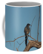 Scrub Jay Private Eye Coffee Mug