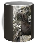 Sea Lion Close-up Coffee Mug