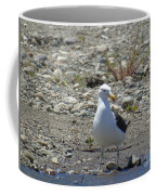 Seagull In Patagonia Coffee Mug
