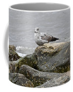 Seagull Sitting On Jetty Coffee Mug