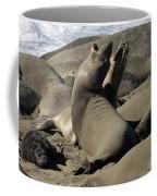 Seal Duet Coffee Mug