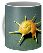 Seashell Guildfordia Yoca Coffee Mug