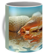 Seashell Reflections On Water Coffee Mug