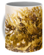 Seaweed In The Sand Coffee Mug