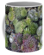 Sedum Plants Used As Green Roof Coffee Mug