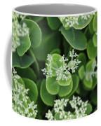 Sedum Pre-bloom Coffee Mug