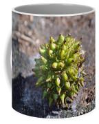Seed Capsule Coffee Mug