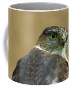 Sharp-shinned Hawk Coffee Mug