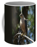 Sharp Shinned Hawk Coffee Mug