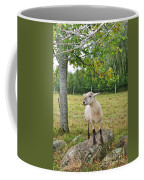 Happy Sheep Posing For Her Photo Coffee Mug