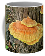 Shelf Fungus - Basidiomycota Coffee Mug