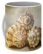 Shell Still Life Coffee Mug
