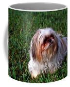 Shitzu Dog Coffee Mug