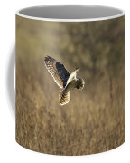 Short-eared Owl About To Strike Coffee Mug
