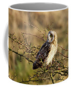 Short-eared Owl In Tree Coffee Mug
