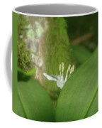 Shy Flower  Coffee Mug