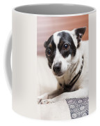 Shy Lonely Mini Fox Terrier Dog Laying On A Bed Coffee Mug