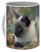 Siamese Cat Hiding Coffee Mug