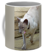 Siamese Exploring Coffee Mug