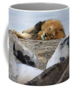 Siesta Time For Lions In Africa Coffee Mug