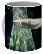 Silver Arowana Fish In Paludarium Coffee Mug