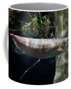 Silver Arowana Fish In Zoo Coffee Mug